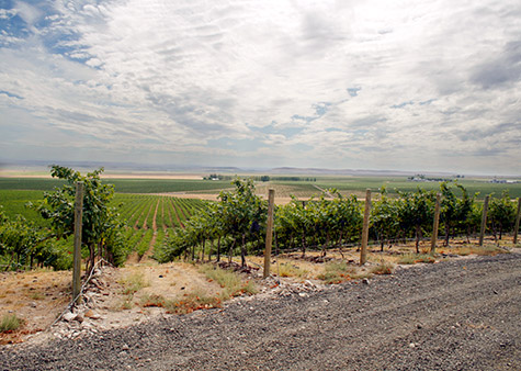 The view south toward the Gorge from Coyote Canyon Vineyards