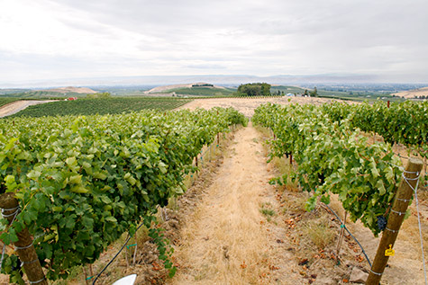 Looking south toward the Yakima Valley from Elephant Mountain Vineyards