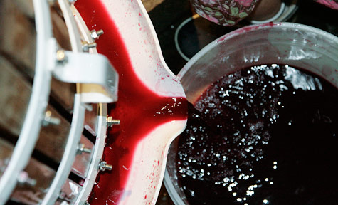 Pressing the merlot at the end of October, 2010